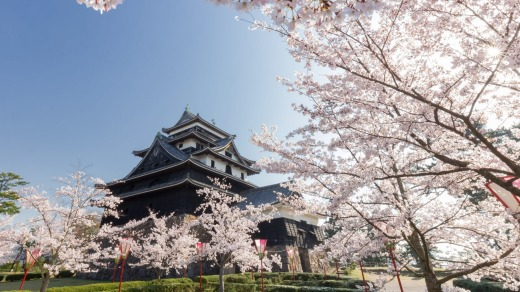 Matsue castle in spring with cherry blossoms, Shimane prefecture, Japan