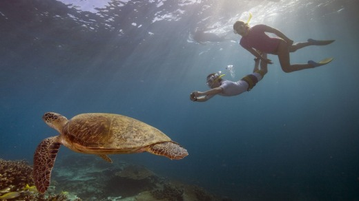 Snorkeling on the reef.