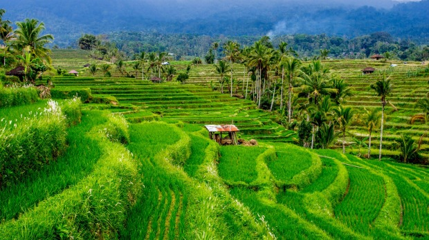 Marvel at Bali's UNESCO World Heritage-listed rice terraces and water temples that date from the 9th century at Jatiluwah.