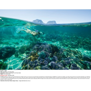 A must on Lord Howe Island: Go snorkelling. Guided snorkelling trips in the island's marine park with tropical fish and ...