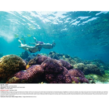 Lord Howe also has the world's most southerly coral reef, a multitude of dive sites, and is a birdwatchers' paradise: ...