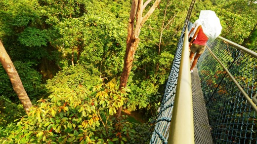 The TreeTop Walk at MacRitchie Reservoir Park, Singapore.