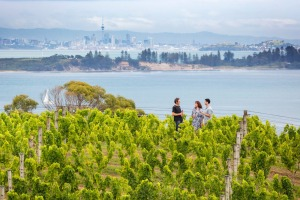 There are more than 20 vineyards on Waiheke.