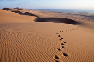 The desert seems barren, but there is life here.