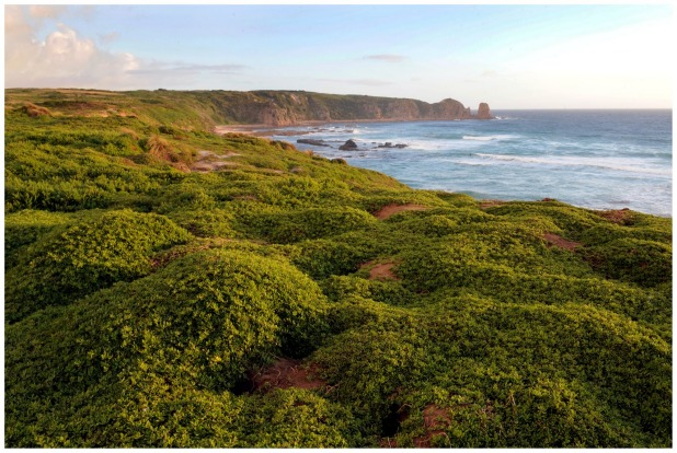 But Phillip Island has more strings to the bow, including wineries, a brewery and the Koala Conservation Centre. If you ...
