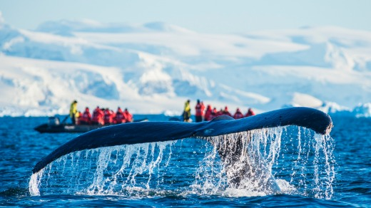 Go sightseeing by zodiac in Antarctica.