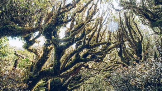 The goblin forest during Pouakai crossing in Mt.Taranaki.