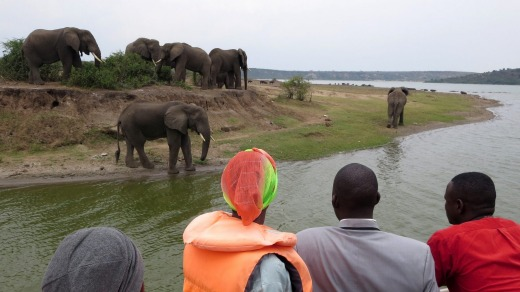 Elephants at the edge of the Kazinga Channel.