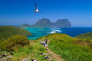 Between its wildlife and landscapes, Lord Howe Island offers plenty of photo opportunities.