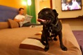 Pet peeve: the demand for dog-friendly hotels in Australia is enormous but rules make it difficult.