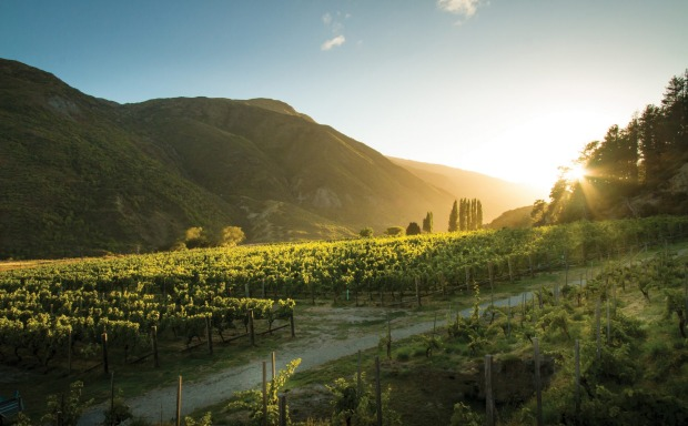 The home block of vines at Gibbston Valley Winery.