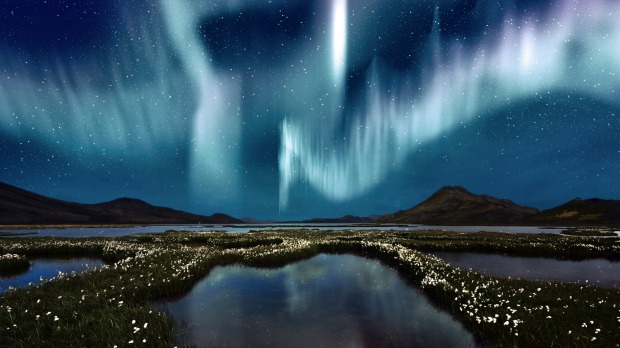 The Northern Lights (aurora borealis) over a marsh landscape with wildflowers in Iceland.