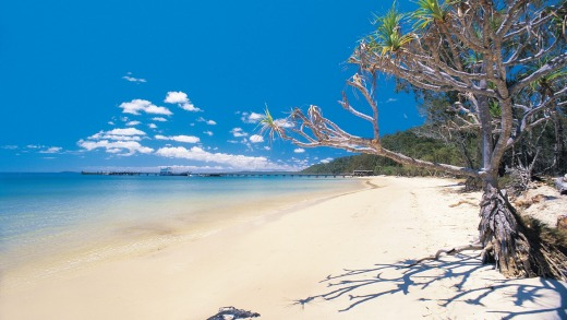 Fraser Island's fabled beaches.