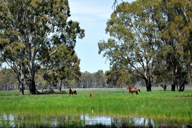 Barmah National Park, Victoria: This smallish park, just north-west of Echuca, is the ideal spot for becoming entranced ...