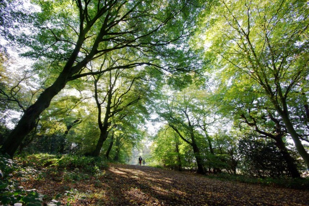 EPPING FOREST: Get some idea of what London was like before urban expansion by taking the underground train to the ...