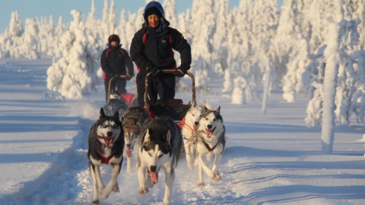 Dog sledding at Oulanka National Park, Finland.