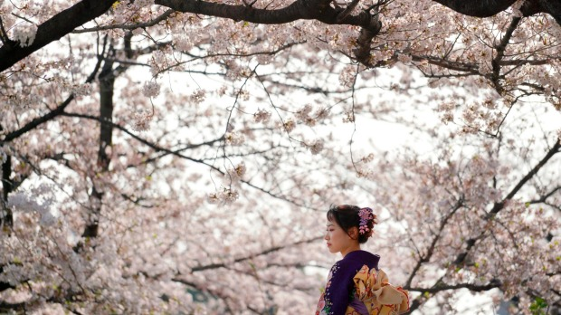 Generally, the cherry blossom (sakura) season starts in southern Japan and runs up to Hokkaido into the north, so if ...