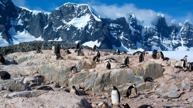 Gentoo penguins at Port Lockroy, Antarctica.