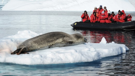 Getting up close to the wildlife in Antarctica.