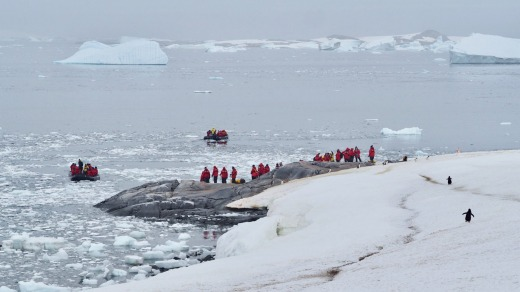 Humans are not the only creatures to walk upright on Antarctica.