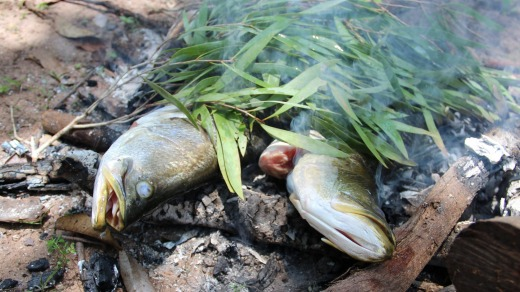 Barramundi on an open fire.