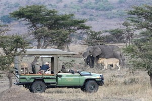 Tourists watch elephants and lions just metres from their vehicle.