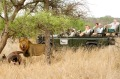 A lion with a buffalo carcass is watched by tourists on a game drive at &Beyond Ngala lodge in the Kruger Park area of ...