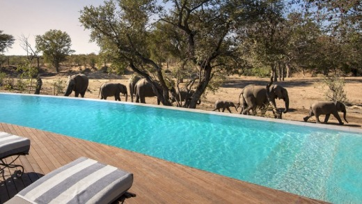 A herd of elephants walk besides the swimming pool at &Beyond Ngala Safari Lodge.