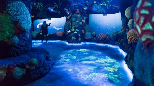 National Geographic Encounter: Ocean Odyssey.