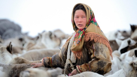 Ekaterina Yaptik, a Nenets herder woman, selecting draught reindeer from a corral.