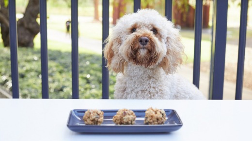 The Storeroom eatery at Vibe Rushcutters Bay is dog friendly.