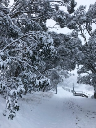 Morning snow at Mount Buller on Friday.
