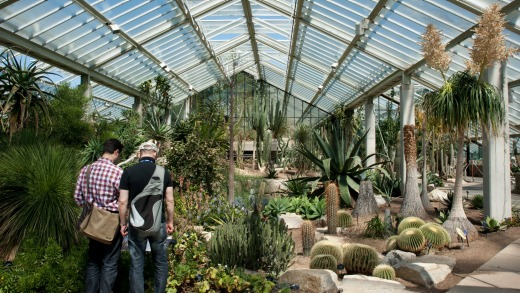 Arid zone of the Princess of Wales Conservatory, Kew Gardens.