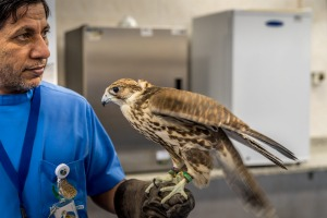 The hospital, which opened in 1999, treats about 11,200 birds a year.