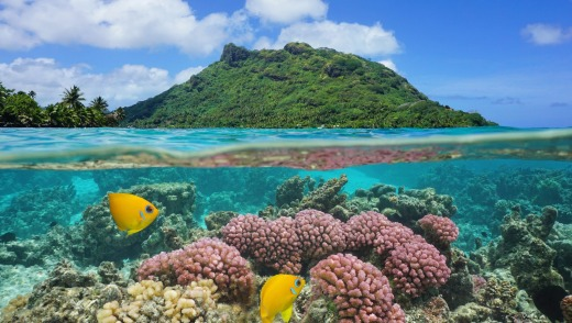Huahine Island with coral and tropical fish underwater.