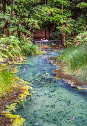 The Redwoods Forest in Rotorua.