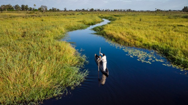 The Okavango River spreads over the delta and transforms the parched landscape into a luminous tapestry of greens and ...