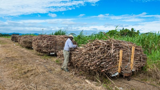 Fiji's sugar cane trains as they used to look.