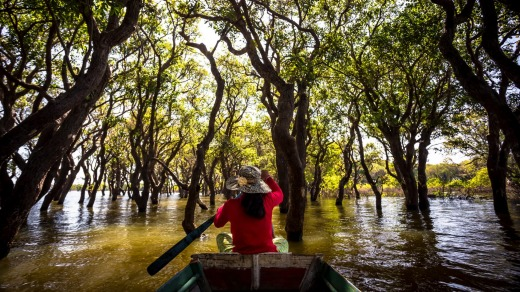 Boat ride through the mangroves.