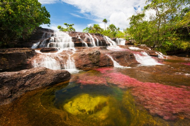 "CANO CRISTALES (COLOMBIA) The so-called ""River of Five Colours"" is a seasonal wonder. Each year between about September ..."