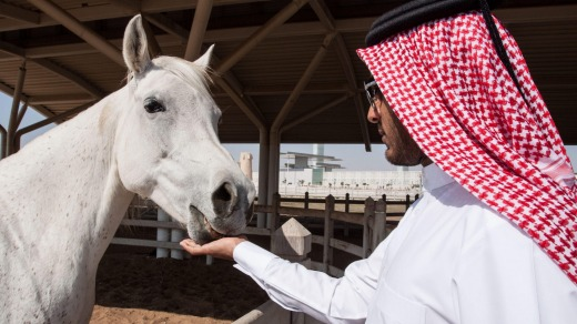 Long before Qatar became one of the world's fastest growing economies, it was revered for its horses.