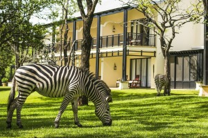 Wild zebras, impalas and giraffes roam freely around the manicured lawns of the Royal Livingstone Hotel.