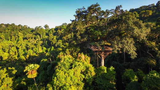 The Gibbon Experience gives travellers a chance to zip line into tree houses where they stay in the hopes of glimpsing ...