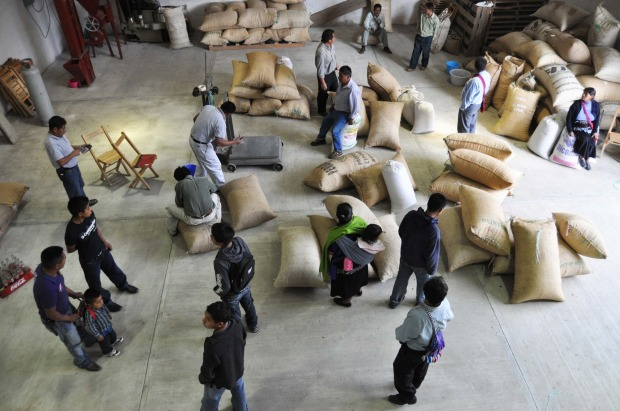 Indigenous workers unloading fair trade coffee in Amaquil, Mexico.