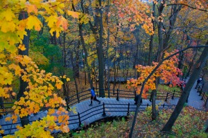 Some of the many stairs leading to Parc du Mont-Royal..
