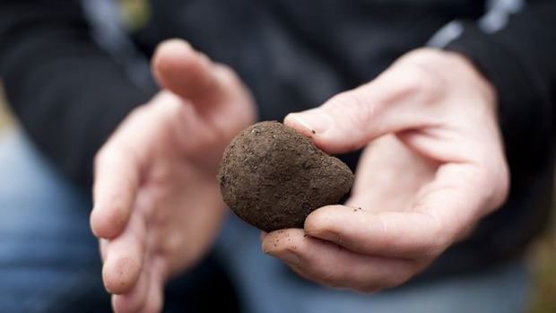 A Tamar Valley black truffle.