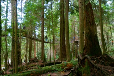 CAPILANO TREETOP ADVENTURE, CANADA This forest and gorge destination just outside Vancouver is most famous for its giant ...