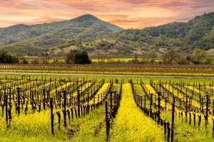 The Napa Valley has a sophisticated cultural life, impressive art galleries and artists' studios.