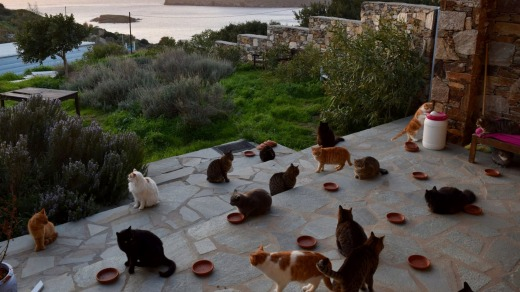 God's Little People Cat Rescue on the island of Syros, Greece, posted an ad on Facebook looking for someone to care for ...