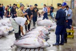 Blue fin tuna: Taste-wise, there's an argument for blue fin being the best type of tuna to eat. But it has been grossly ...